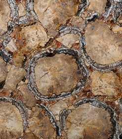 Petrified Wood Brown-Gold