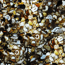 Agate Oceania Backlit
