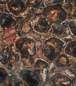 Petrified Wood Dark Brown