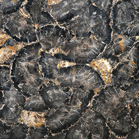Petrified Wood Black