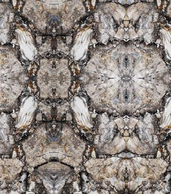 Petrified Wood White Zazen Composition