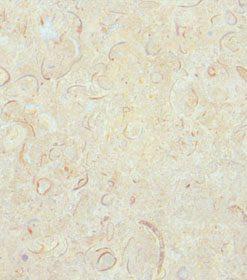Sisal Limestone